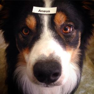 Angus, with his name tag.